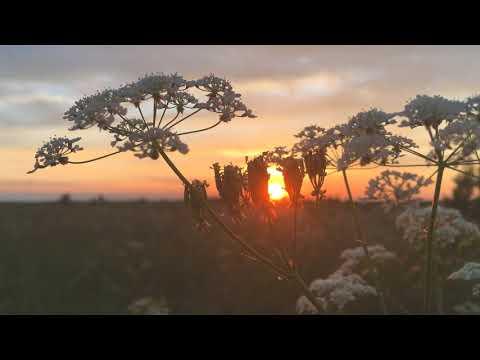 The ant on the plant. Sunset. Муравей на растении. Закат.