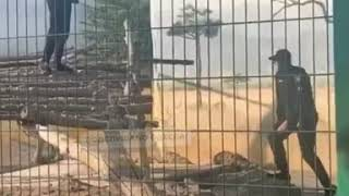 Неадекватный одессит залез в клетку со львами в биопарке. Видео