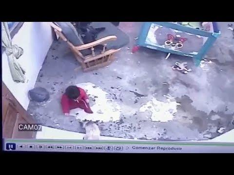 Γάτα - ήρωας σώζει μωρό  πριν πέσει από τις σκάλες