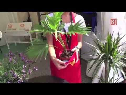 A Euroflora anche vasi e annaffiatoi impermeabili di un'azienda ligure