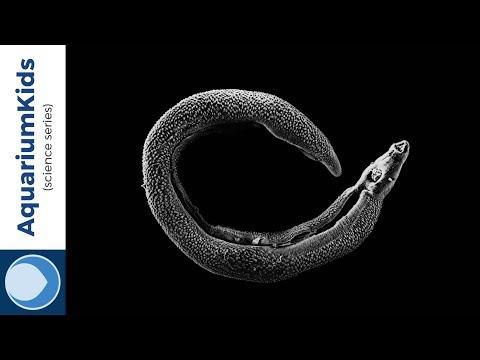 Virus hpv penyebab kanker serviks