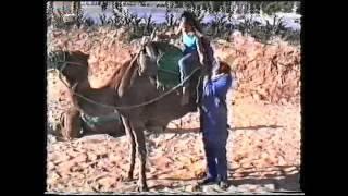 preview picture of video 'Kamelreiten in Tunesien Hammamet'