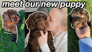 BRINGING HOME OUR PUPPY FOR THE FIRST TIME!   Meet Our New Labradoodle Puppy :)
