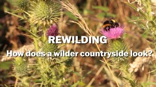 Thumbnail for Rewilding - What Does a Wilder Future Look Like?