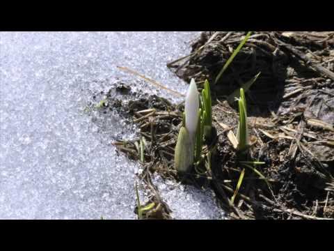 Green World Rising - Restoration