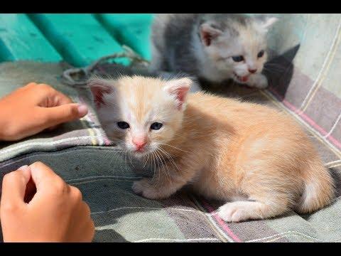 Новости нашего Двора. ❤ Котята ❤