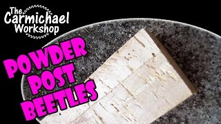 How to Remove Powder Post Beetles from Wood