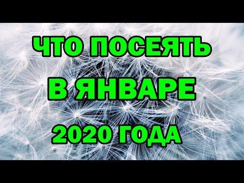 Что посеять в ЯНВАРЕ 2020 года.