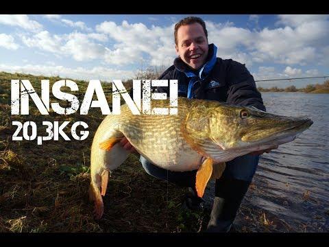 Gedde på over 20 kilo tager død agnfisk fra bunden