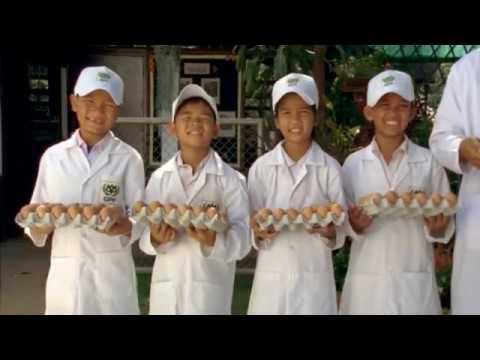 CPF | ซีพี CSR เลี้ยงไก่ไข่