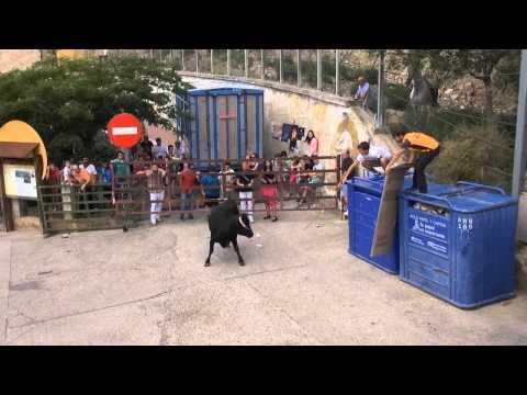 2º VACAS CALLE EN CERVERA DEL RIO ALHAMA (LA RIOJA) 28 -07- 2014