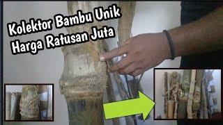 Kolektor Bambu Unik Harga Ratusan Juta | Jenis Bambu Unik, Bambu Pethuk Juga Ada