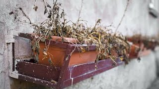 5 trick You Can Try to Revive Almost Any Dead Plant - Gardening Tips