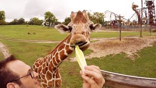 Feeding Giraffes in 360° at Busch Gardens