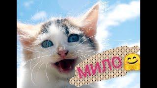Самые милые котики)) Получи свою дозу радости!