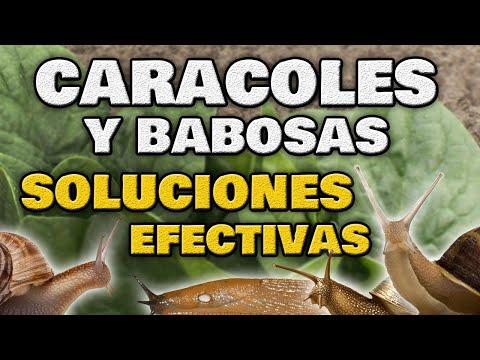 Como ELIMINAR CARACOLES y BABOSAS del Jardín y Huerto Urbano 🐌 Métodos Caseros y 100% Ecológicos