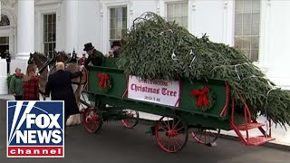 Live: Trump, First Lady receive the White House Christmas Tree