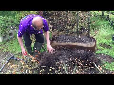 Bonsai for Free - Beech Trees
