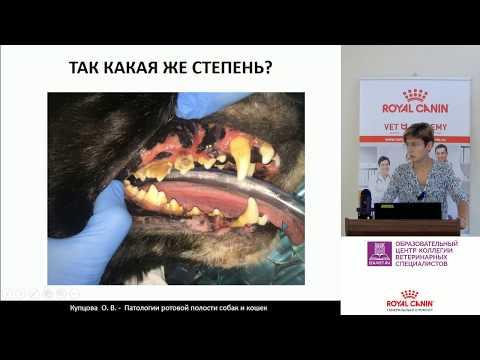 Купцова О. В. - Патологии ротовой полости собак и кошек: на что стоит обратить внимание