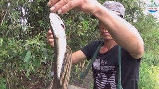 107 | Thăm Câu Cắm Trên Ruộng Lúa P2 | Fishing