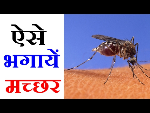 Mosquito Repellent - 7 Best Natural Ways To Get Rid of Mosquitoes - 5 मिनट में होगा मच्छरों का सफाया