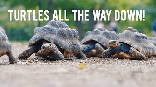 Kenyon College: Turtles All the Way Down!