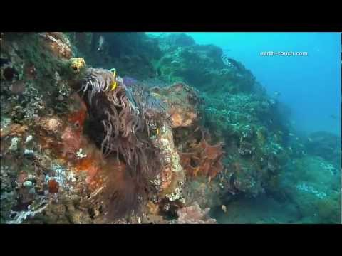 Extinction risks for coral reefs essay