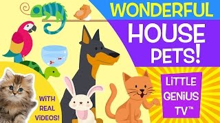 House Pets!   videos for babies, toddlers, kids   Little Genius TV™