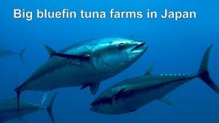 Японские виды ловли рыбы