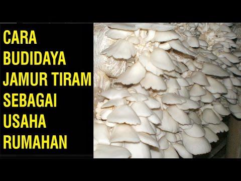 Video Cara Budidaya Jamur Tiram Sebagai Usaha Rumahan
