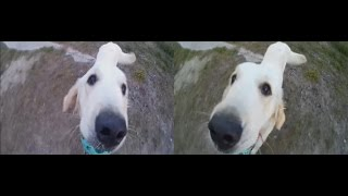 Dogs 3D ! Three Jolly Furry Friends! 3d vr video ( Google Cardboard )
