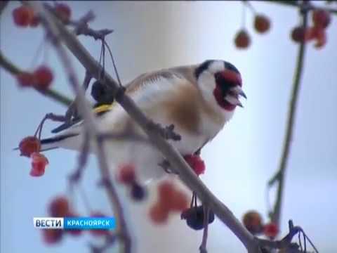 В Красноярск раньше времени пришла весна