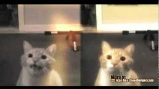 Мило – кот, который поёт…