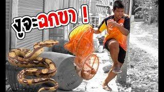 จะเอาถังใส่ปลา แต่เจองู !!!   เด็กตกปลา