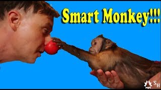 Monkey Tricks The Magician