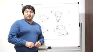 Вся порода в голове, или три типа головы САО.
