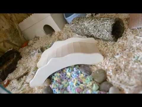 Hamstergehege Tour / artgerechte Hamsterhaltung  /Hamsterkäfig