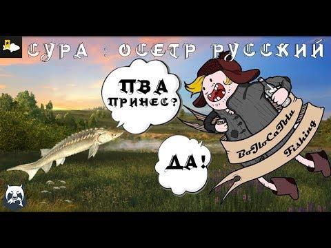 Сура - Осетр