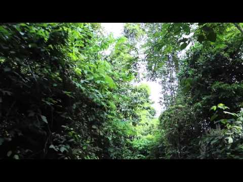 Côte d'Ivoire Abidjan Parc  national du Banco / Ivory Coast Abidjan Banco National park