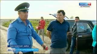 В Астраханской области незаконно добывают солодку. Какой ценой?