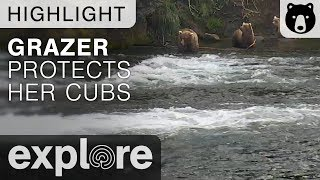 Grazer Protects Her Cubs - Katmai National Park - Live Cam Highlight