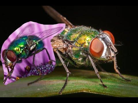 Как избавиться от мух в доме быстро в домашних условиях