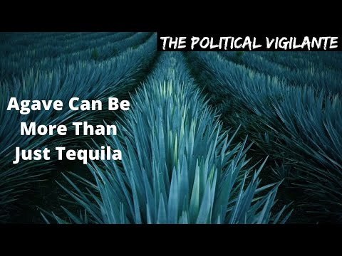 Revolutionary Agave Based Agroforestry Can Reverse Climate Collapse