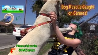 Download Youtube: Abandoned dog, waiting for her owner to come back gets rescued - Please share!