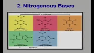Molecular Basis of Inheritance 1
