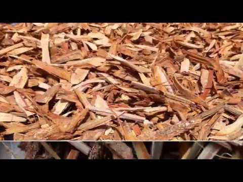 Image Result For Bajakah