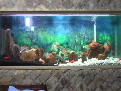 Video Aquarium Lobster Air Tawar