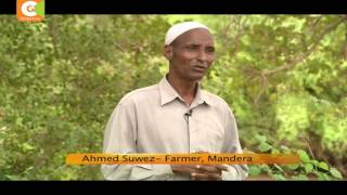A Mandera farmer turns arid land into fertile farm, records bumper harvest