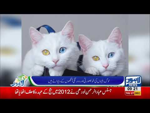 Cats With Colored Eyes Popular On Internet | Jaago Lahore