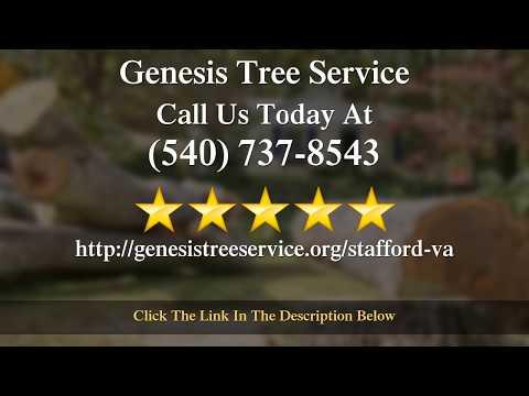 Genesis Tree Service Reviews 5 Star Tree Trimming
